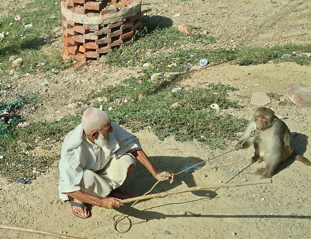 old man with monkey