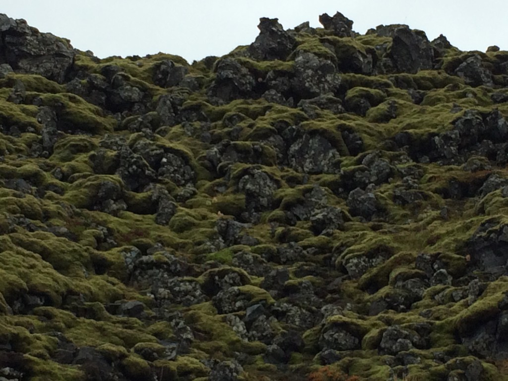 Lichen-covered rock part way between Anarstappi and Hellnar