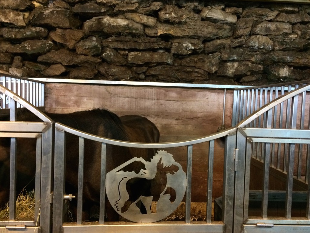 Icelandic Horse stable