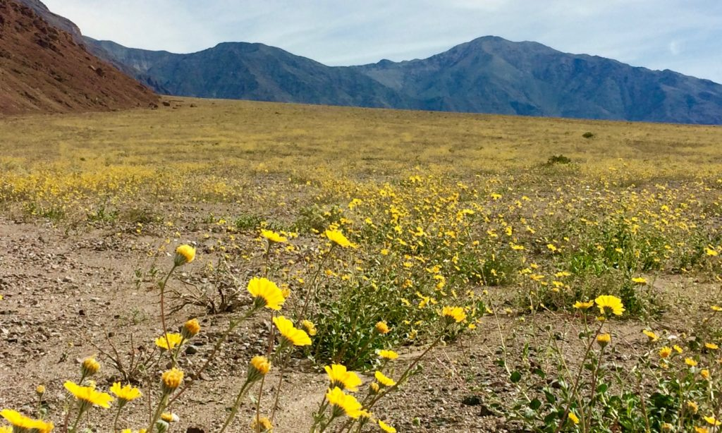 the super bloom of 2016