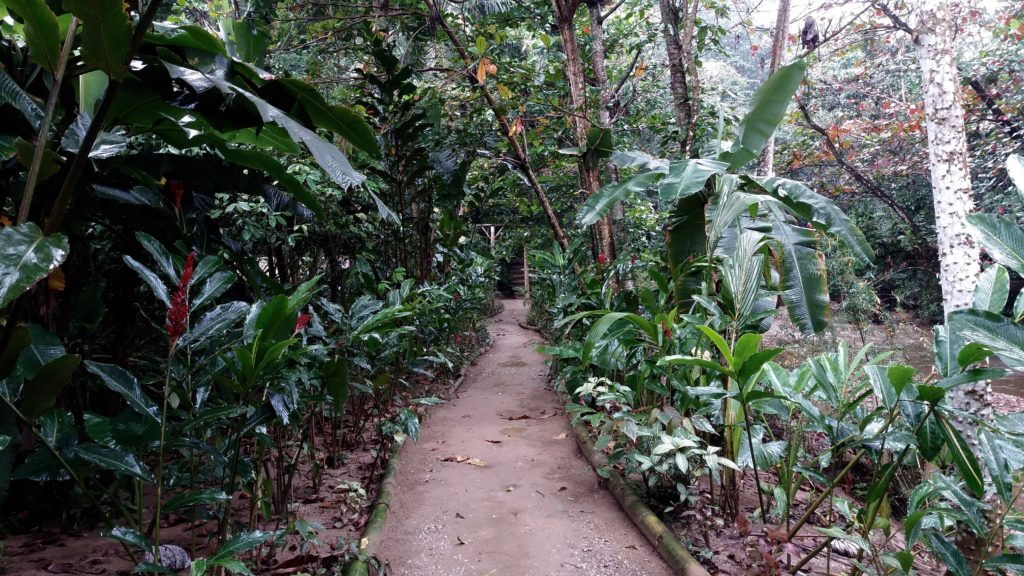 Pathway in