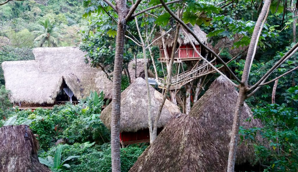 Tree house roofs