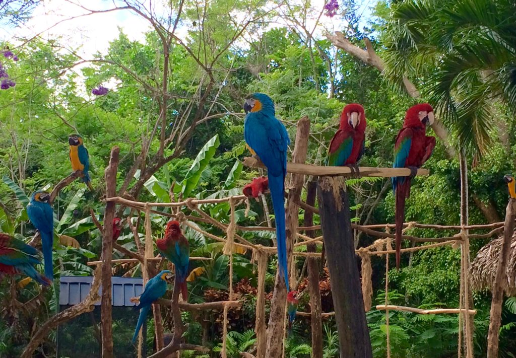 Macaws who do not fly