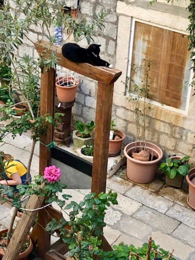 Cat lounging on a guillotine