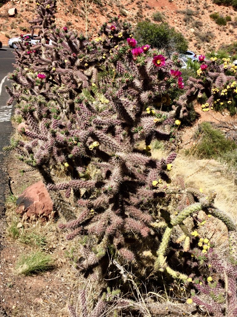 Blooming cactus along the path to the Chapel of the Holy Cross
